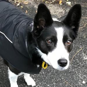 Rescue Dog Franki